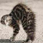 gatto minacciato
