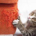perchè il gatto affila gli artigli sul divano