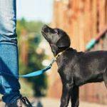 comandi per cuccioli di cane