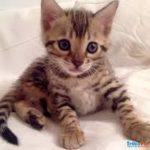 come accogliere un gattino in casa