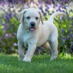 fino a che età un cane può essere definito cucciolo.