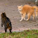 cosa fare quando i gatti litigano