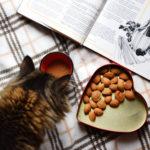 il gatto mangia lentamente