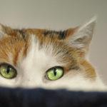 se il gatto è ansioso che fare