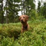 piante velenose per i cani