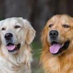la comunicazione tra cane e padrone