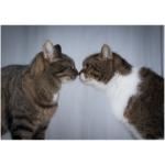 come inserire un nuovo gatto in casa