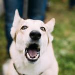 i vari tipi di abbaio di un cane