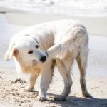 cane che gioca con la coda