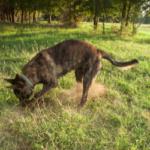 perchè il cane scava le buche