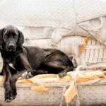 perchè il cane rovina il divano