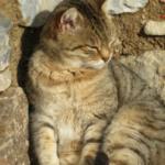perché un gatto, dopo essere uscito di casa, non mangia e continua a dormire.