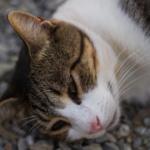 colpo di calore  nel gatto: ecco cosa fare