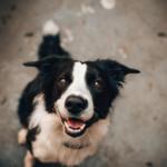 emozioni nel cane