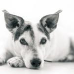 è obbligatorio sterilizzare il cane