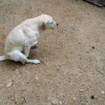 perché il cane spesso struscia il sedere sul pavimento.