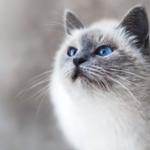 la magia del gatto