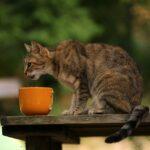 perchè il gatto mangia in alto