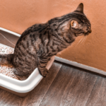 gatto con difficoltà a urinare