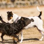 perchè i cani si annusano
