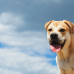 cane che ansima