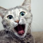 gatto che respira a bocca aperta