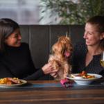 cane al ristorante cosa dice la legge