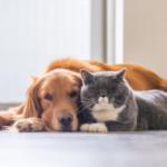 cani gatti e lockdown