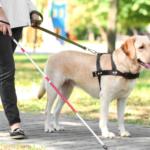 cane guida per ciechi