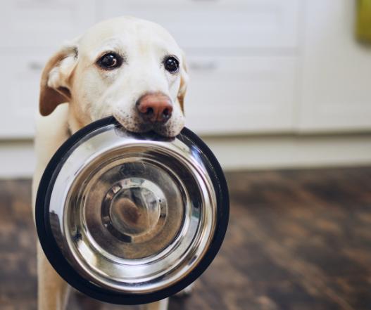 nutrizione cuccioli di cane