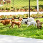 cani nei parchi pubblici
