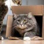 gatto nel cartone