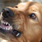 cane che morde