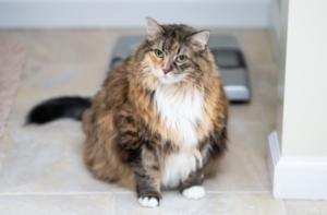 nutrizione gattini