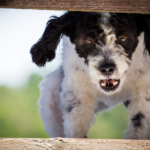 la rabbia nel cane