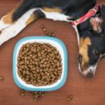 cosa fare se il cane non mangia