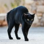 il comportamento del gatto quando è impaurito