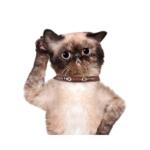 la capacità uditiva dei gatti