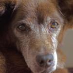 incontinenza nei cani