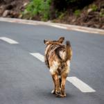quali pene rischia chi uccide un cane o un gatto