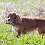 cosa succede se il cane mangia una preda
