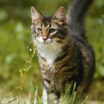 senso di orientamento del gatto