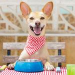 temperatura cibo cani