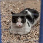 dermatomicosi nei gatti