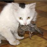 gatto mangia uccello