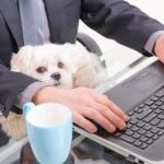si può portare il cane in ufficio