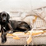 cosa fare se il cane fa danni in casa
