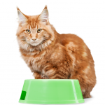 perchè il gatto non mangia