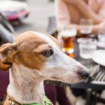 il cane può entrare nei luoghi pubblici?